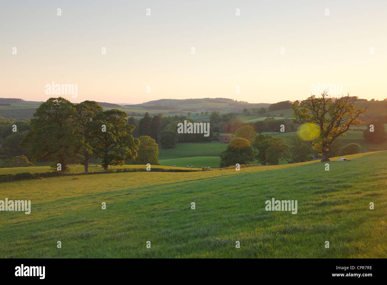 Trees and fields in golden light on a summers evening at Armathwaite, Eden Valley, Cumbria, England, UK - Stock Image