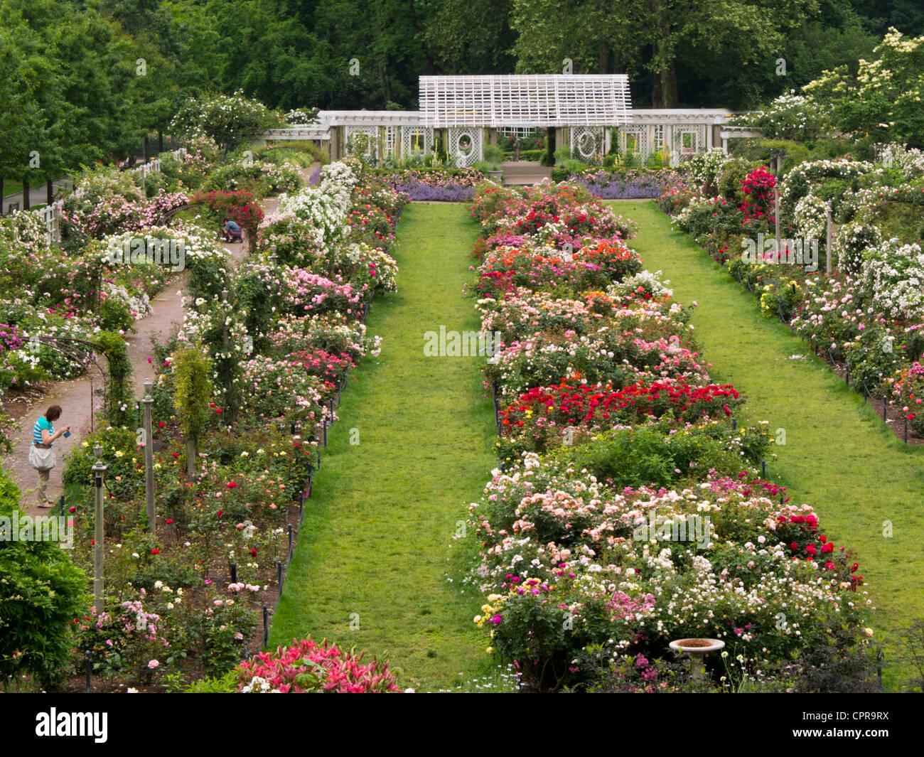 Cranford rose garden brooklyn botanic garden stock photo - Brooklyn botanical garden admission ...