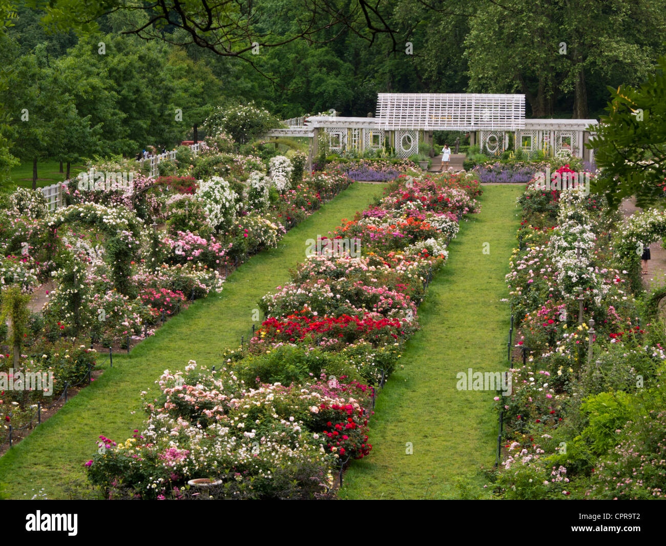 Fantastique Cranford Rose garden Brooklyn Botanic Garden Stock Photo - Alamy ZB-28