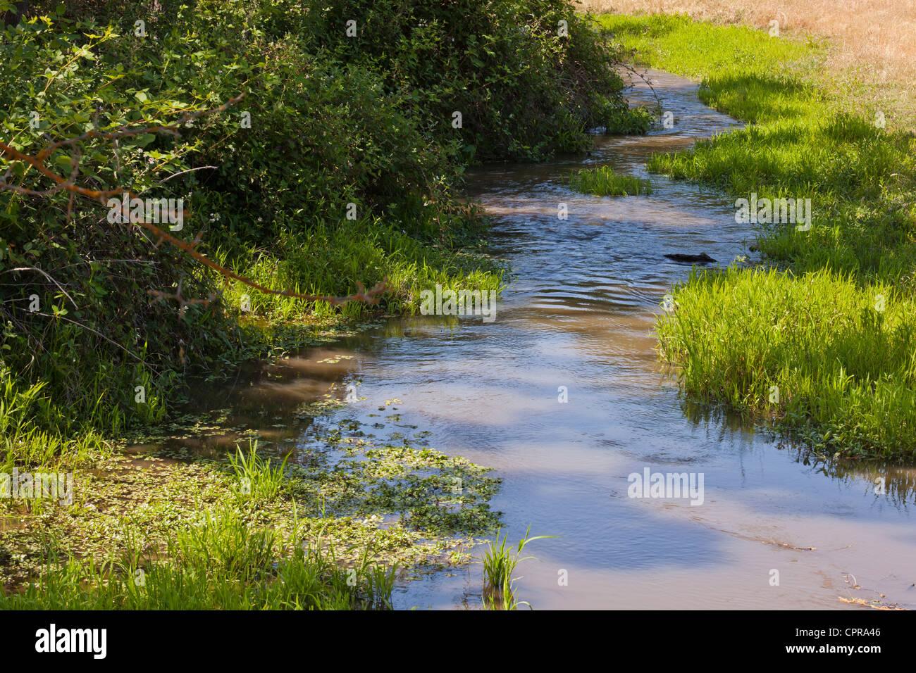 A small grassy stream - Stock Image