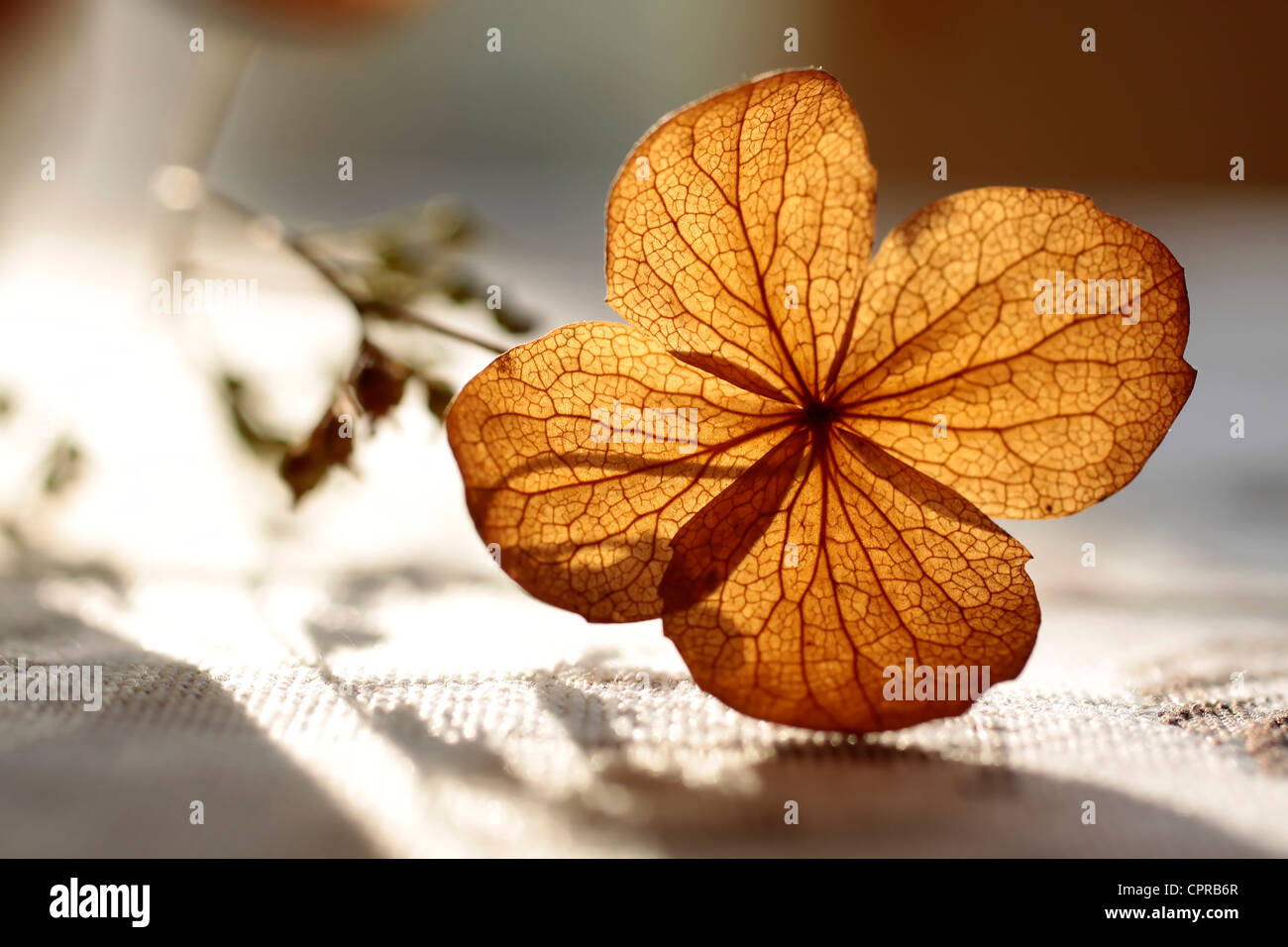 Autumn decoration with dried plant - Stock Image