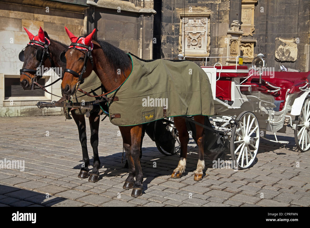 Two Fiaker Horses wit their carriage in front of Saint Stephen's Cathedral in Vienna - Stock Image