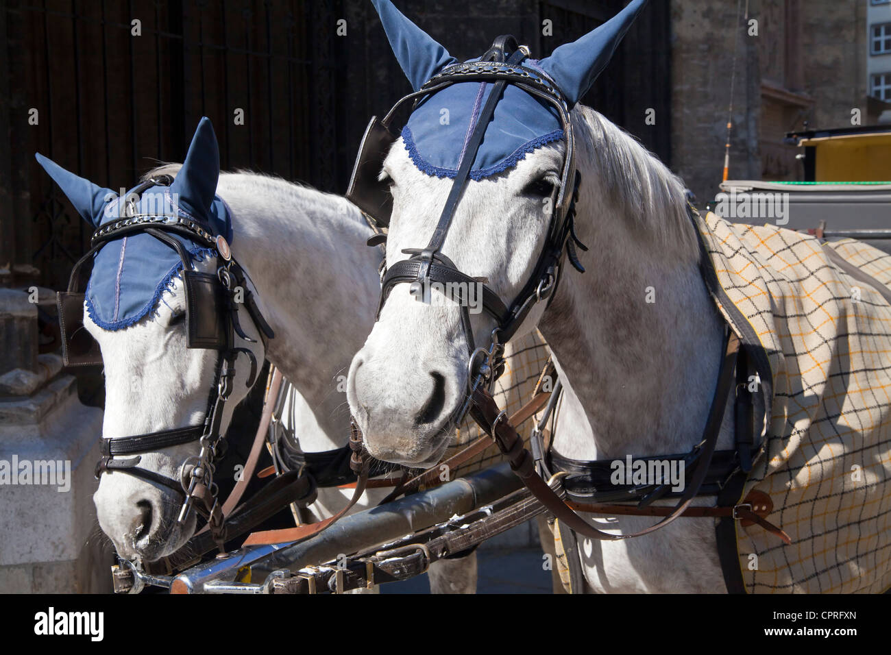 Fiaker Carriage Horses with blue Ear Covers, Vienna, Austria - Stock Image