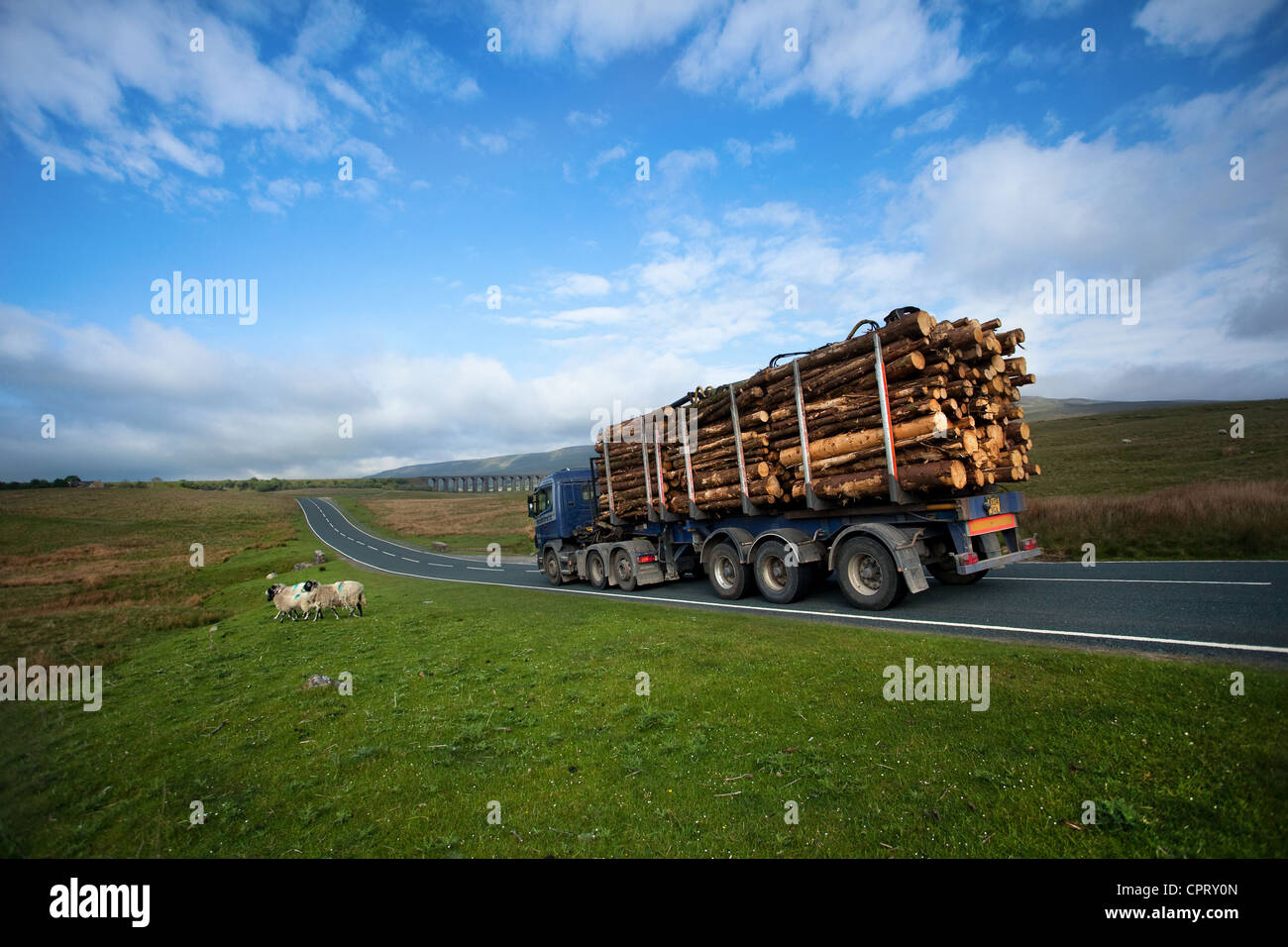 Scania Log Transport Lorry _ Trucking Timber to Ribblehead Rail Link, North Yorkshire Dales, UK - Stock Image