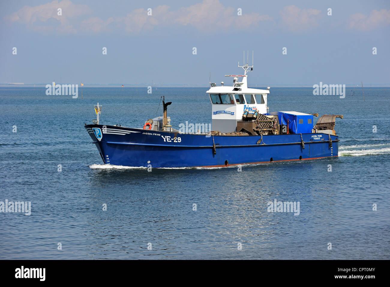 Fishing boat / Mussel cutter sailing to the port of Yerseke along the Oosterschelde / Eastern Scheldt, Zealand, - Stock Image