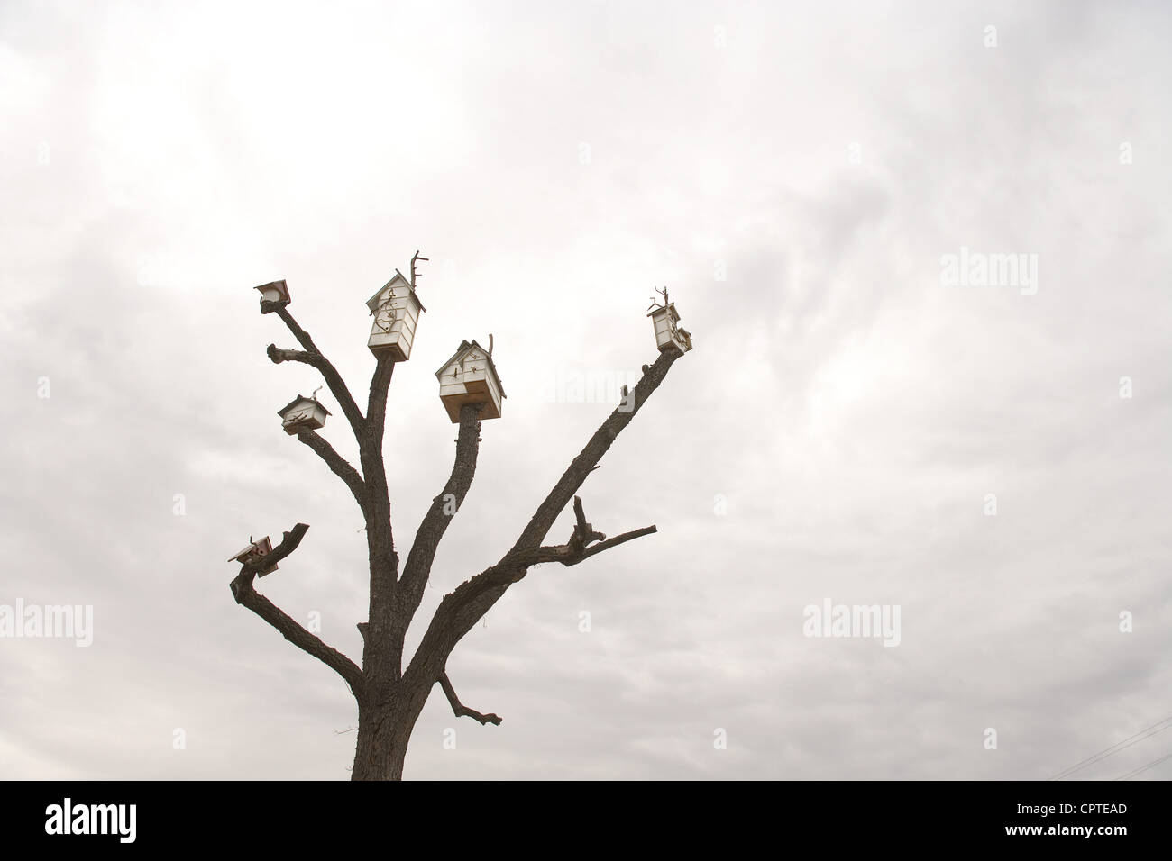 Birdhouses on tree against overcast sky - Stock Image