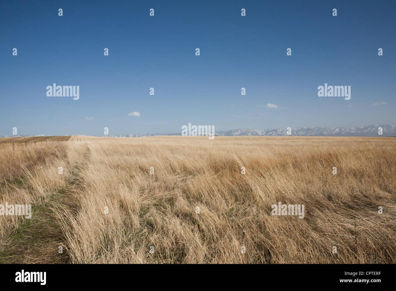 Field of dry grass, Idaho, USA - Stock Image
