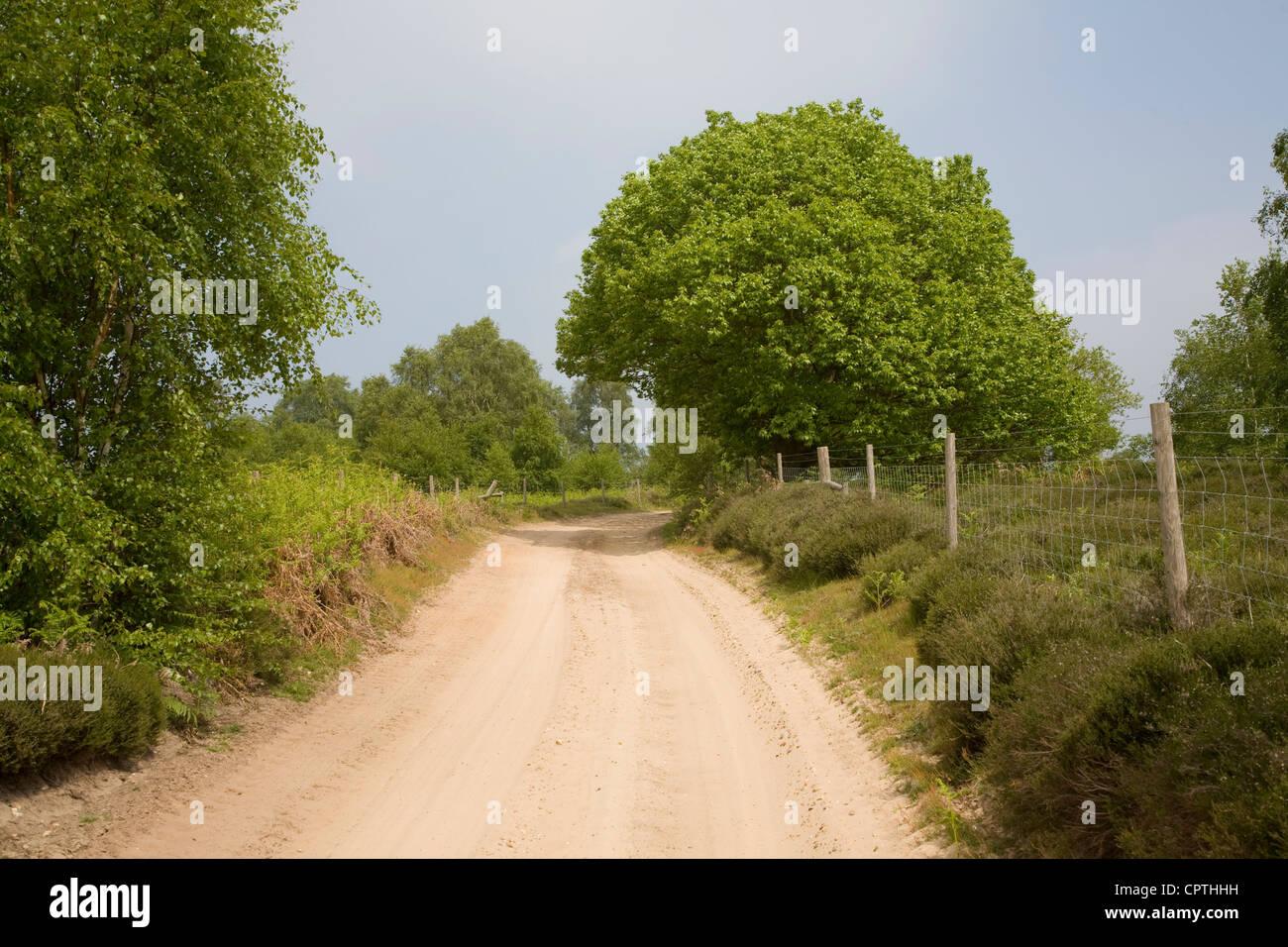 Sandy track Sutton Heath, Suffolk, England - Stock Image