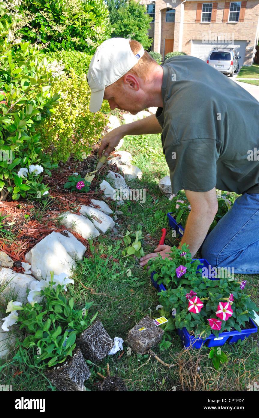 Gardener planting flowers - Stock Image
