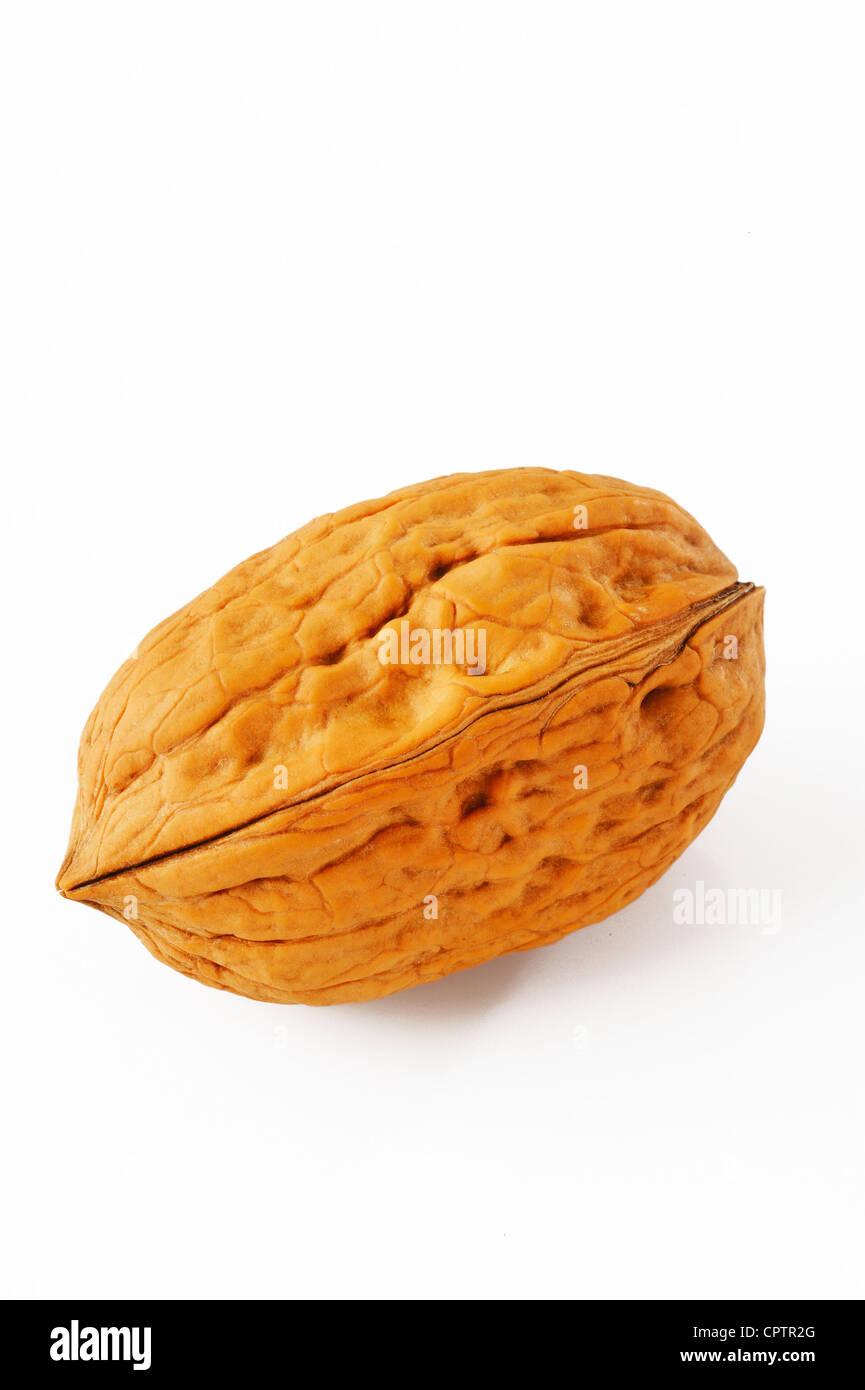 walnut on white - Stock Image