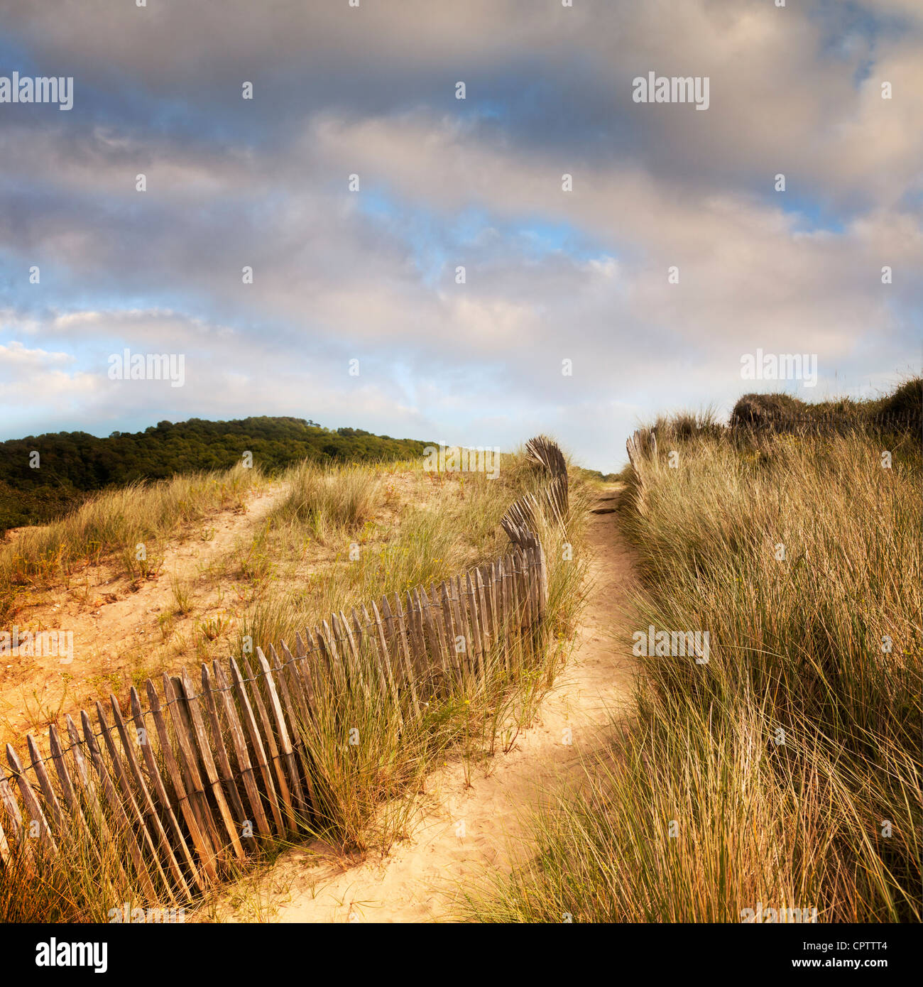 A path and an old fence through sand dunes. - Stock Image