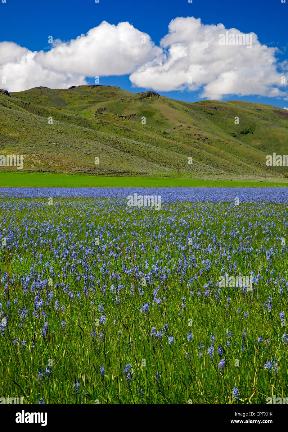 Camas County, Idaho: Centennial Marsh Camas Prairie - Stock Image