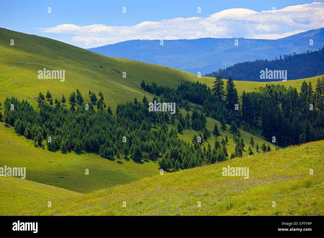 National Bison Range Wildlife Refuge Rolling prairie hillsides folded with scattered forest margins - Stock Image