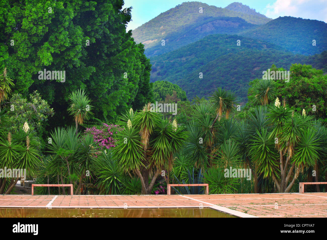 Edge of reflecting pool at garden looking out to yucca plants, ahuehuete trees and mountains in Vista Hermosa, San Stock Photo