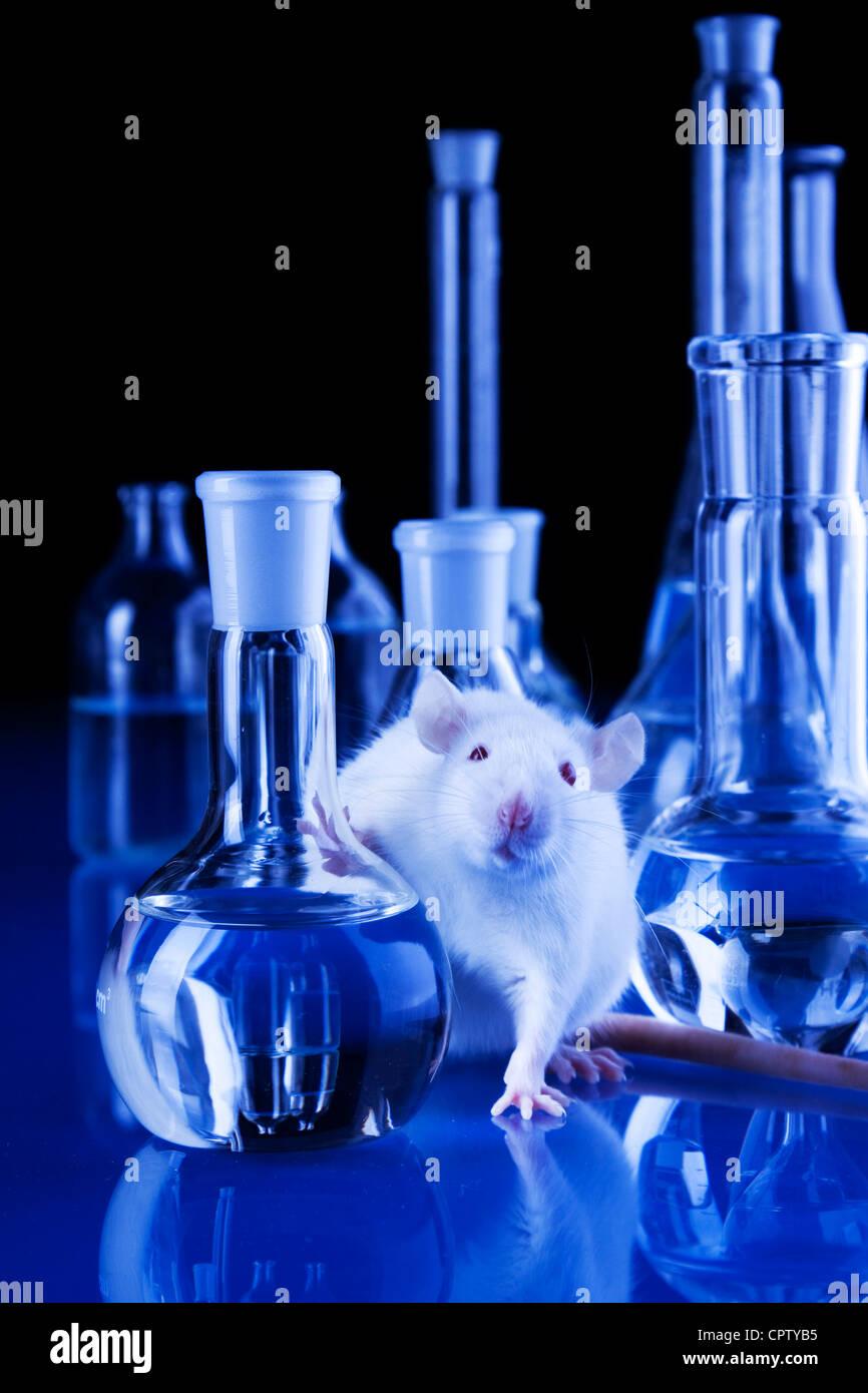 animal tests - Stock Image