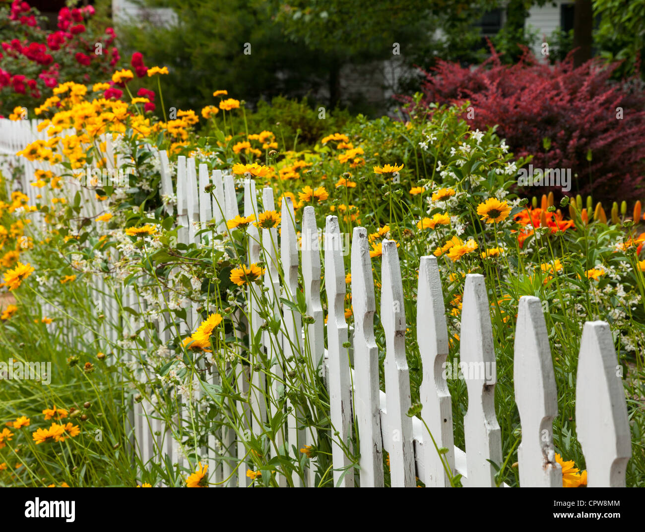 White picket fence around a garden with summer flowers, USA - Stock Image