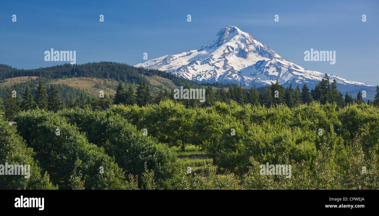 Hood River County, Oregon View of snow covered peak of Mount Hood above the fruit orchards of Hood River Valley - Stock Image
