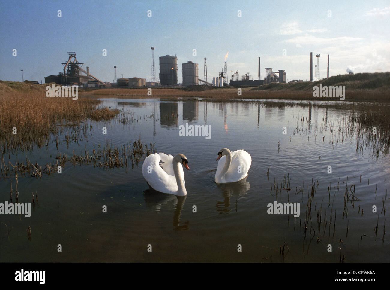 Two swans & the former British Steel works at Redcar, now operated by Sahaviriya Steel Industries (SSI). - Stock Image