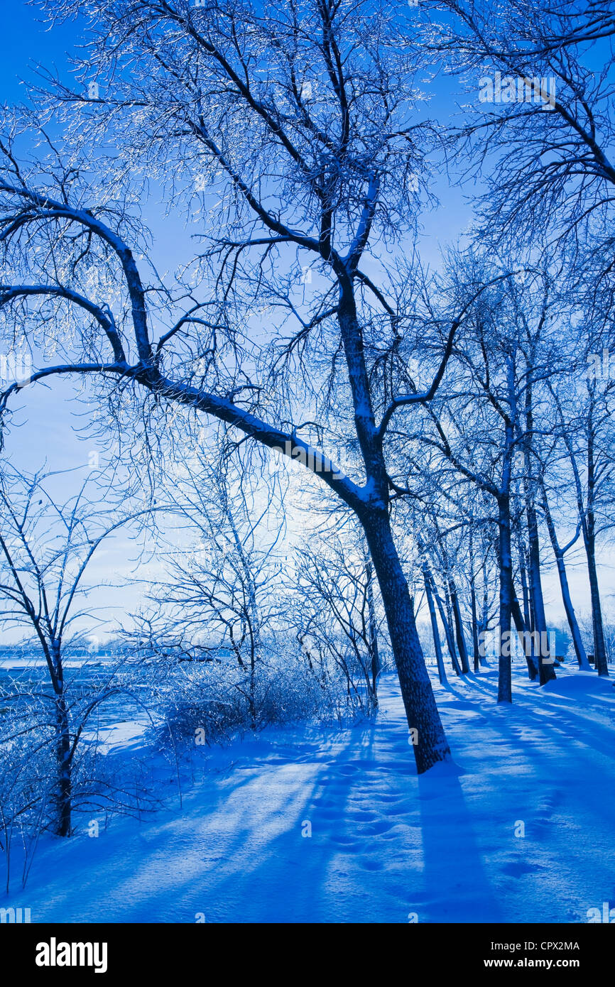 Bare trees, Ile St Jean, Terrebonne, Lanaudiere, Quebec, Canada - Stock Image