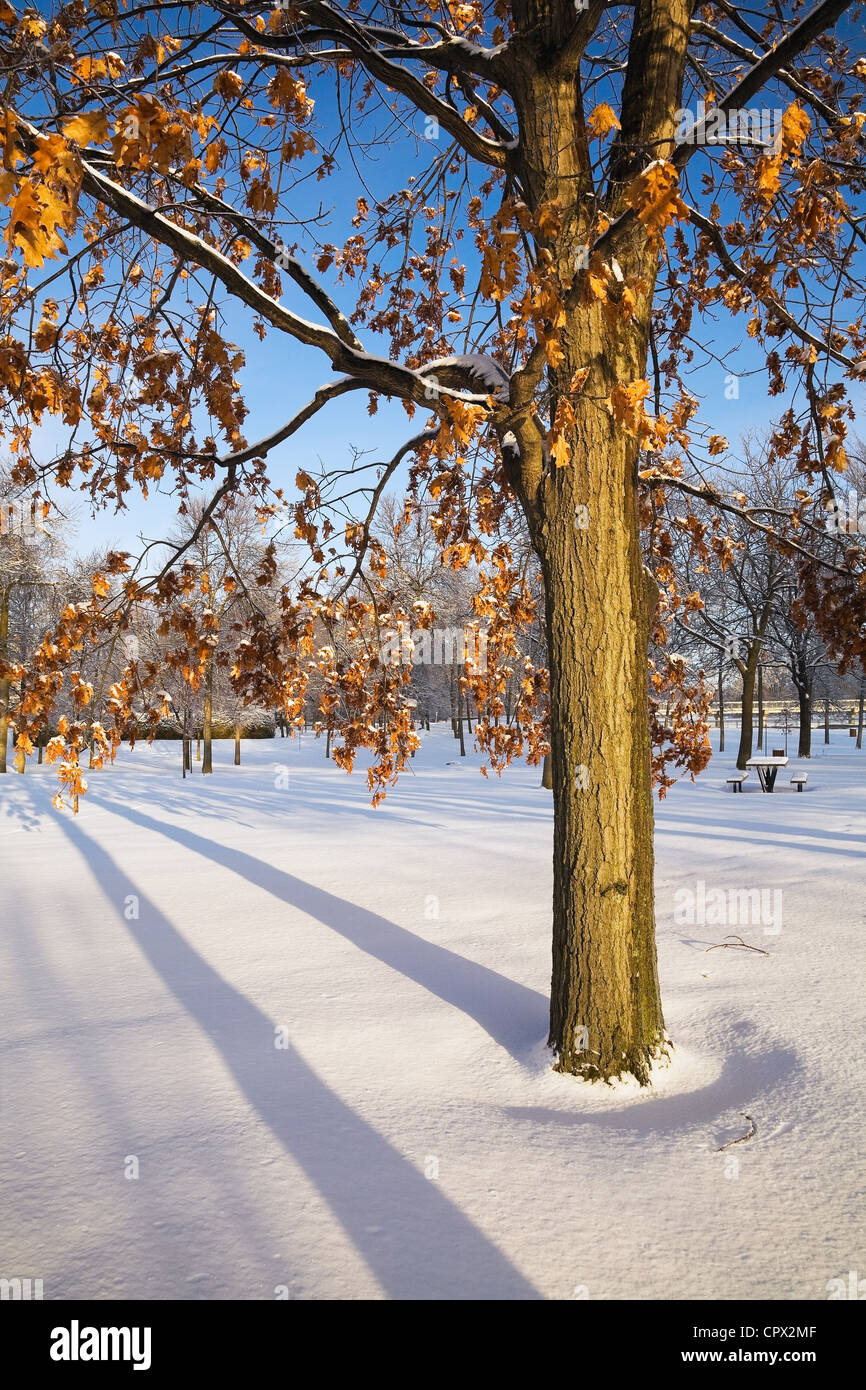 Trees in snow, Ile St Jean, Terrebonne, Lanaudiere, Quebec, Canada - Stock Image