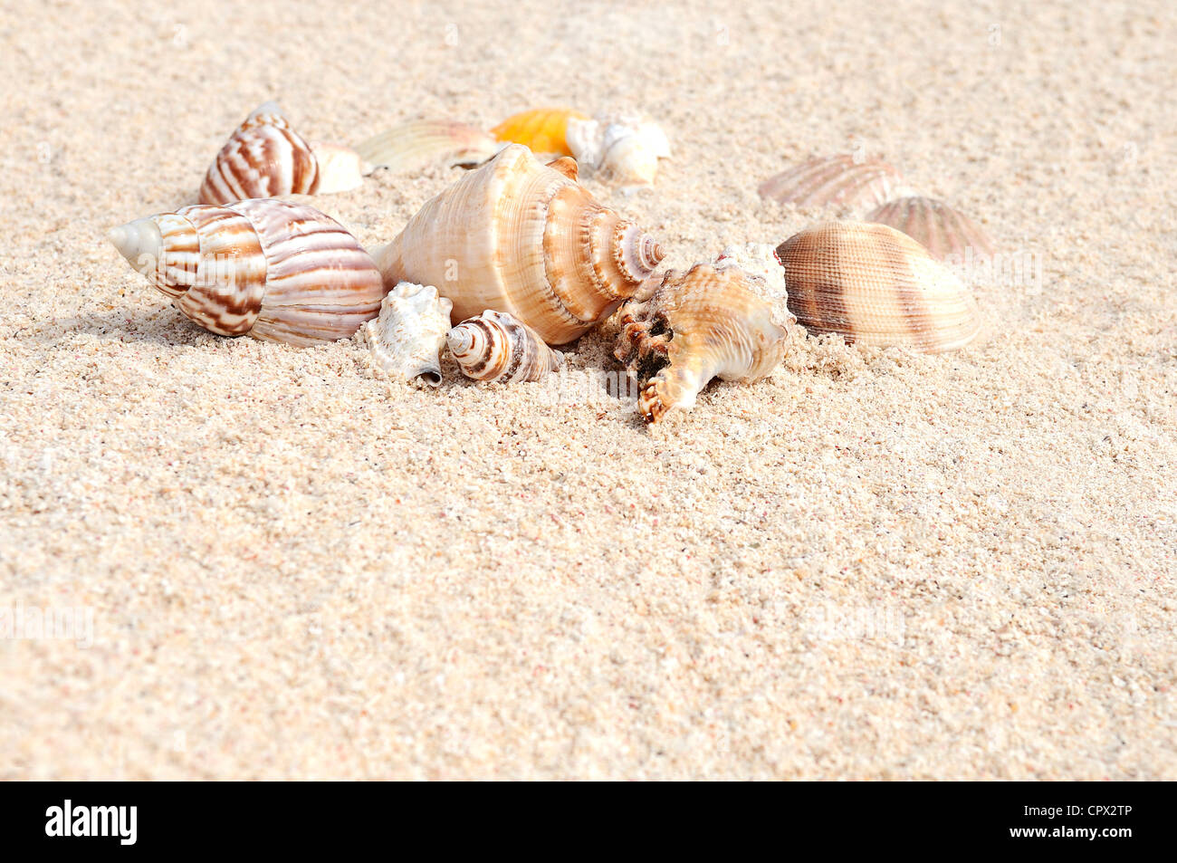 sea shells with sand as background - Stock Image