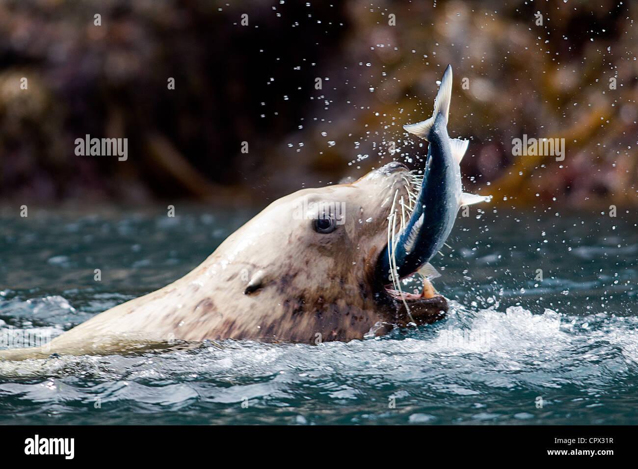 Sea Lion Stock Photos & Sea Lion Stock Images - Alamy