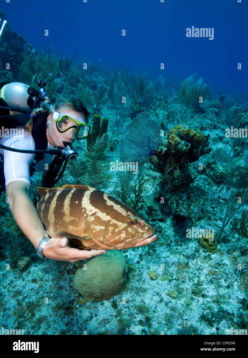 Interaction with Marine Life - Stock Image