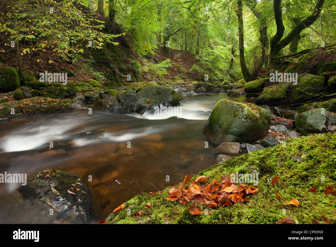 the Birks of Aberfeldy, Perthshire, Scotland - Stock Image