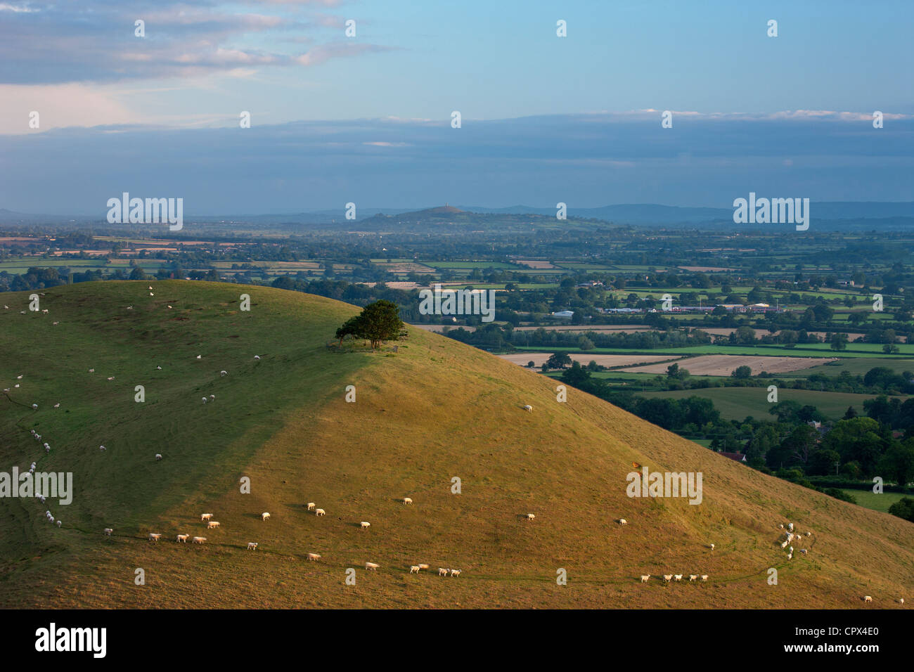 Parrock Hill wiith Glastonbury Tor in the distance, from Corton Hill, Somerset, England, UK - Stock Image