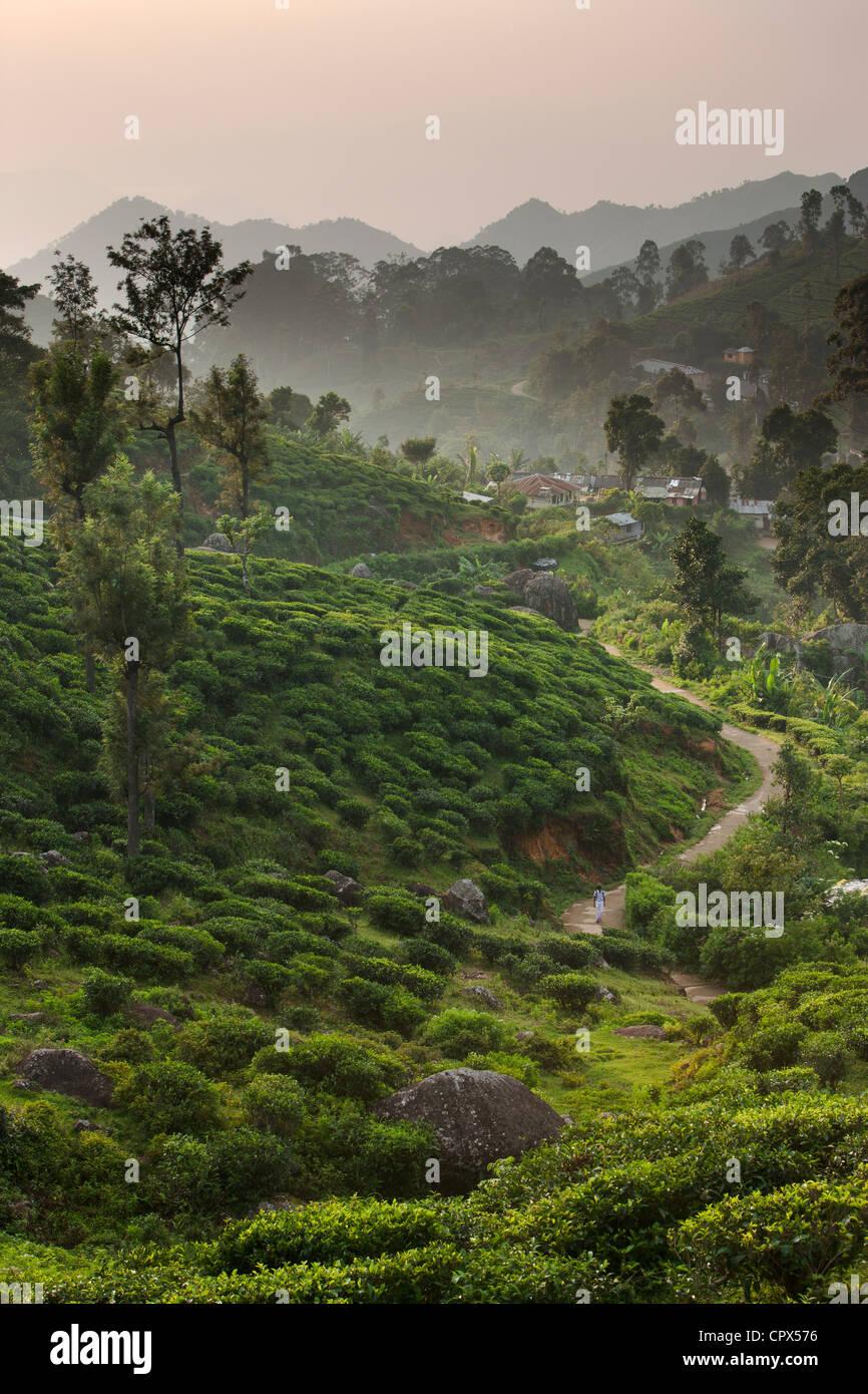 village of Namunukalu surrounded by a tea plantation, nr Ella, Southern Highlands, Sri Lanka Stock Photo