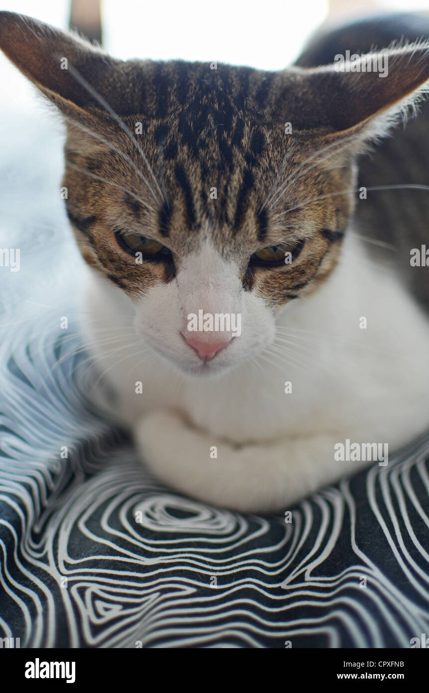 Cute kitten on bed - Stock Image