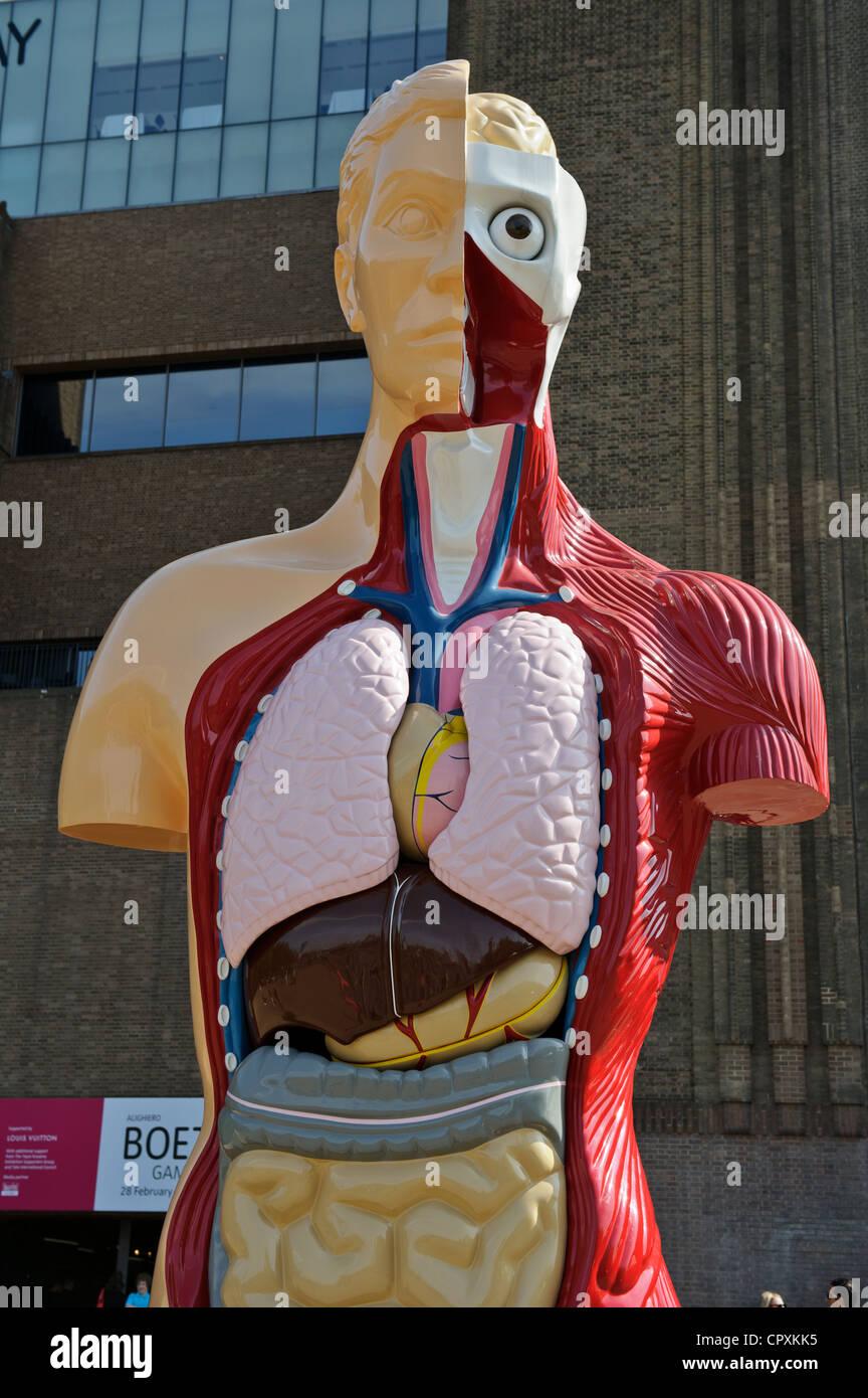 Human Anatomy by Damien Hirst, Tate Modern, London, England. - Stock Image