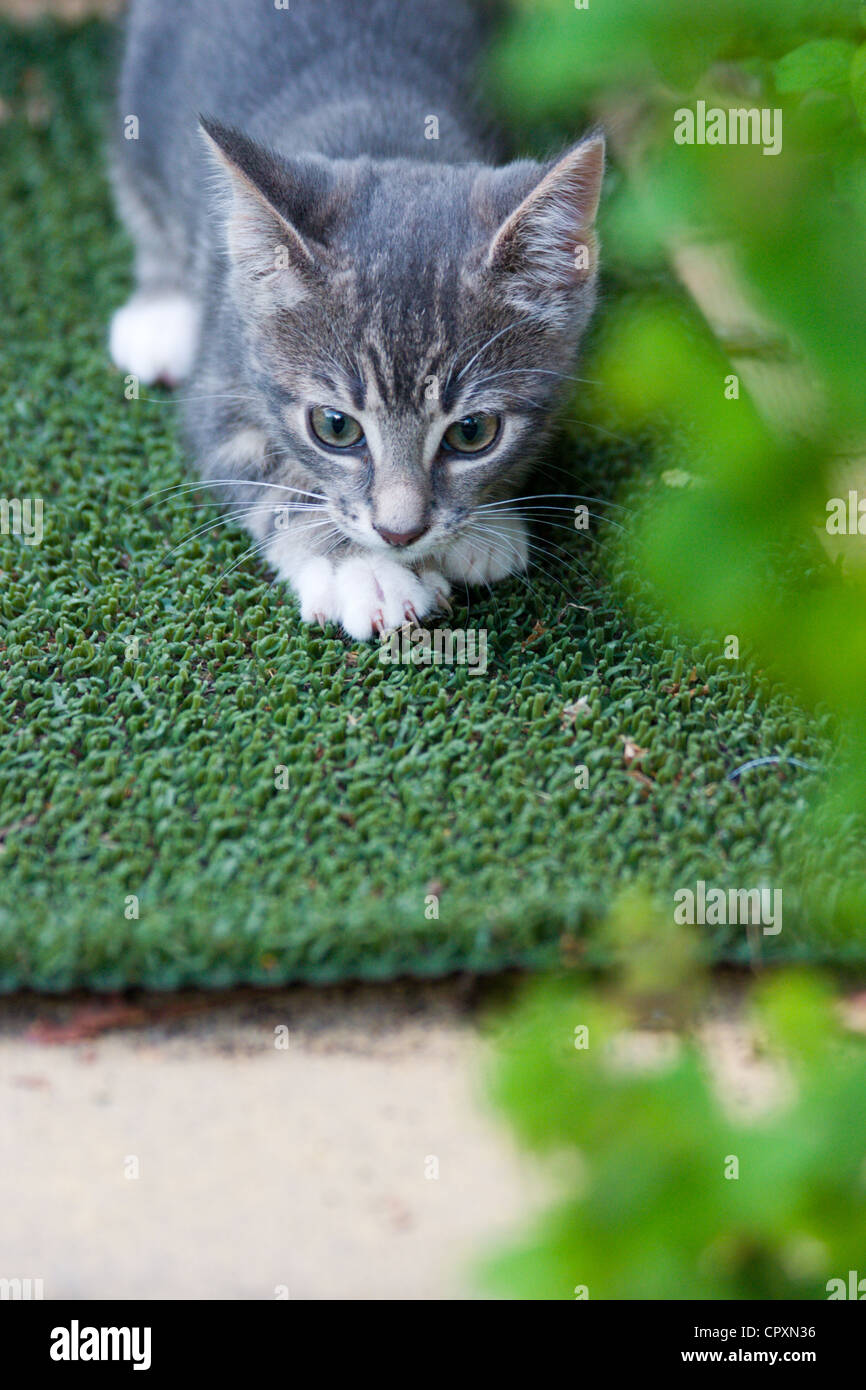 A domestic kitten crouched down on a garden mat in garden - Stock Image