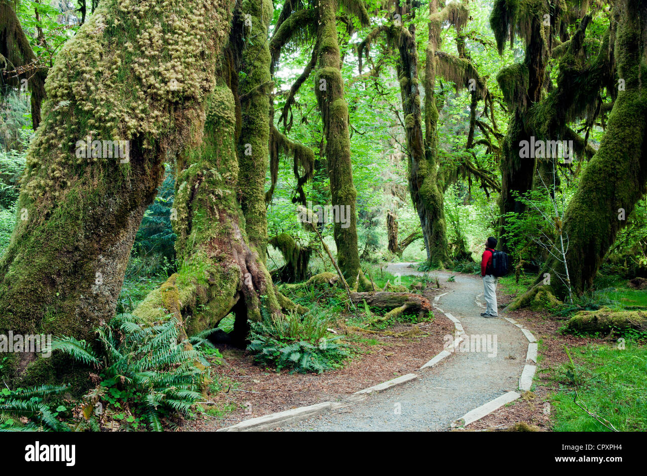 Hoh Rainforest Olympic National Park Near Forks
