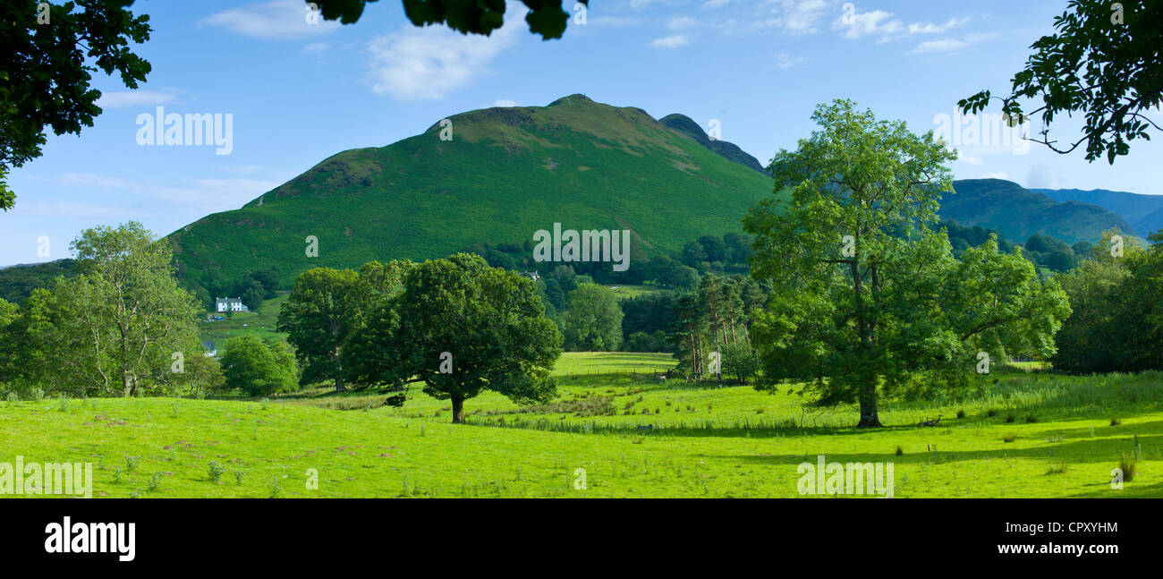Ash tree by Catbells mountain in Cumbrian mountain range at Stair near Derwentwater in Lake District National Park, - Stock Image