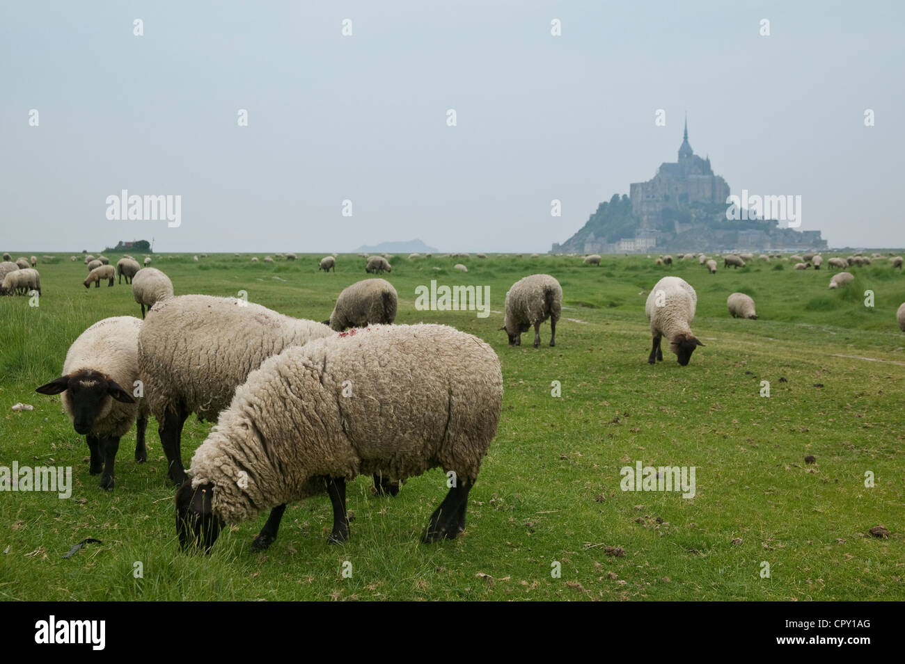 Mont Saint Michel, tide flat, Manche (50), Ille-et-Vilaine (35), Brittany/Normandy, France Stock Photo