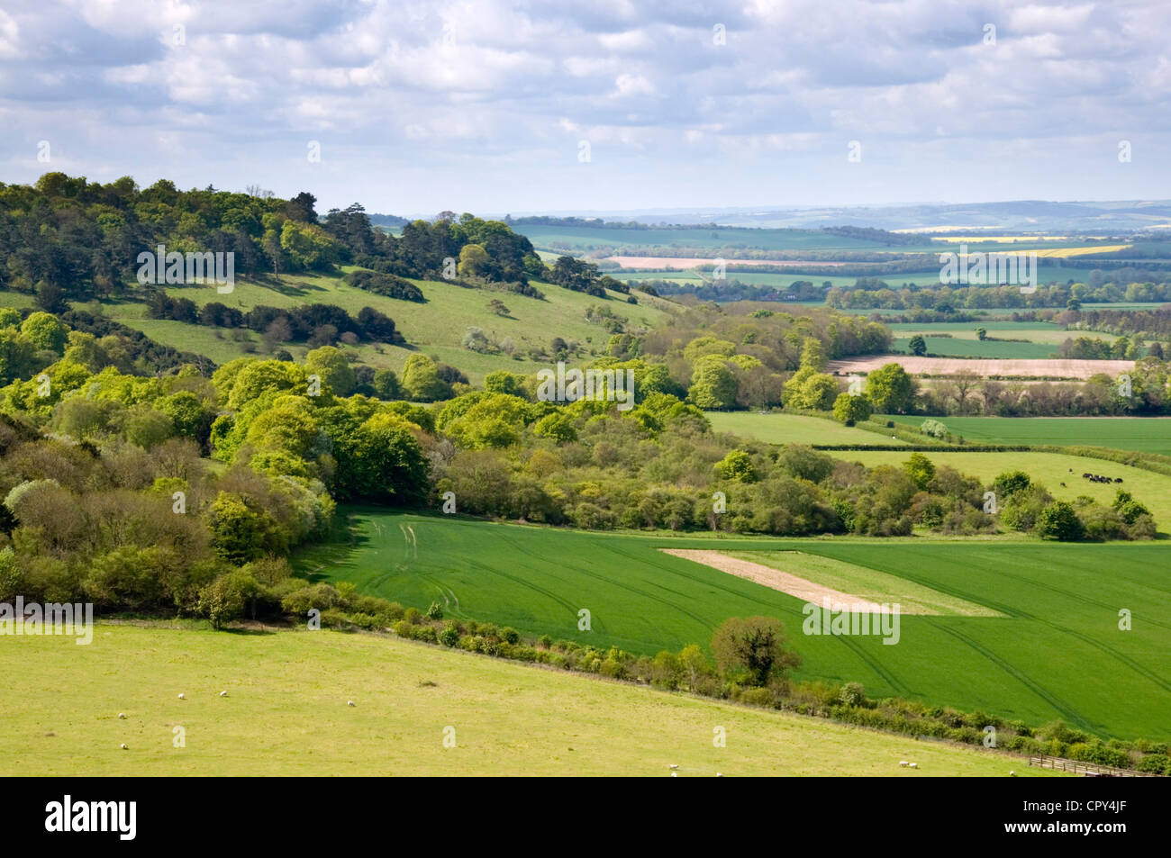 Oxon - Chiltern Hills - landscape nr Lewknor - woodlands - green fields - blue haze of distance - sunlight and shadows - Stock Image