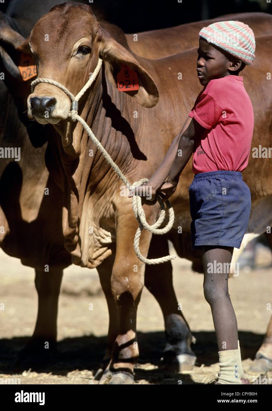 Namibia, Windhoek, foire de Windhoek, young ovambo employee - Stock Image