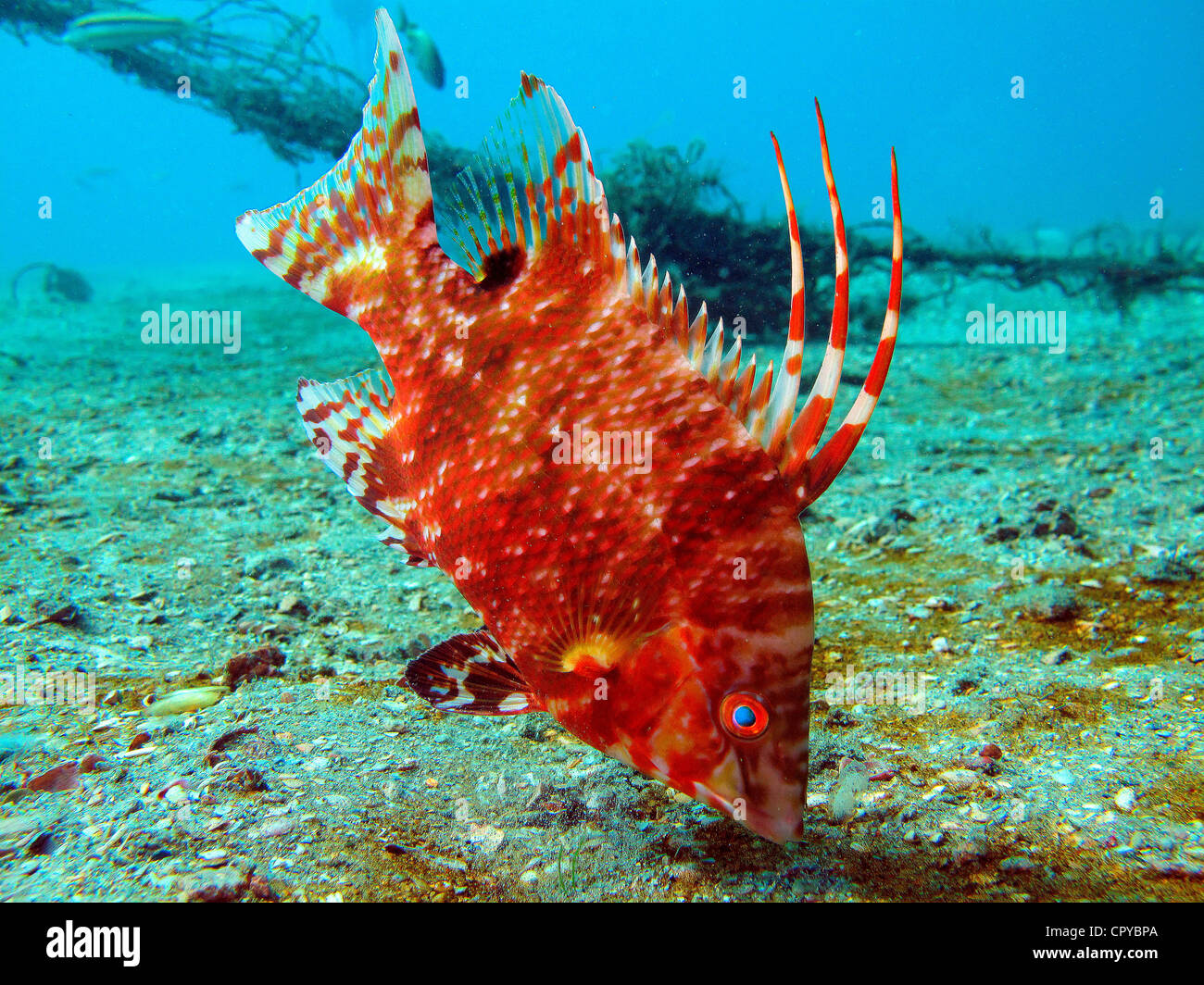 Florida Reef Fish Stock Photos & Florida Reef Fish Stock Images - Alamy