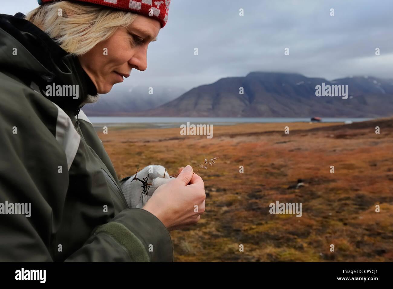 Norway, Svalbard (Spitzbergen), Longyearbyen, Permila from Svalbard University studying a graminaceae Stock Photo