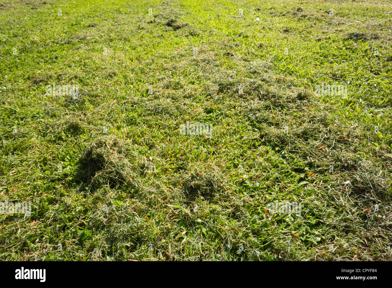 New mown grass lawn - Stock Image