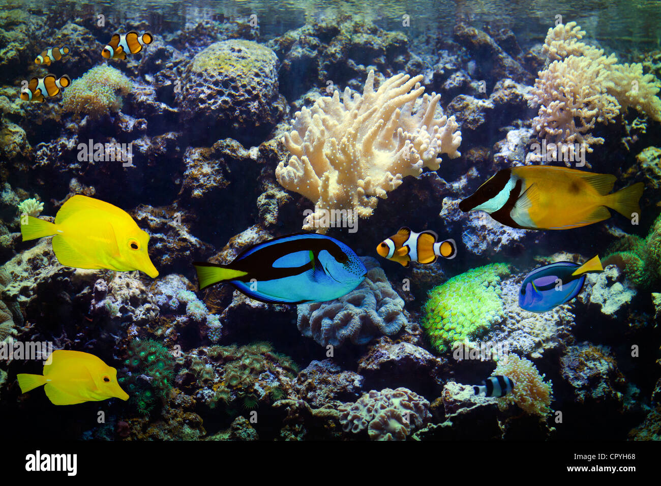 Aquarium Exotic and Tropical coral reef colorful