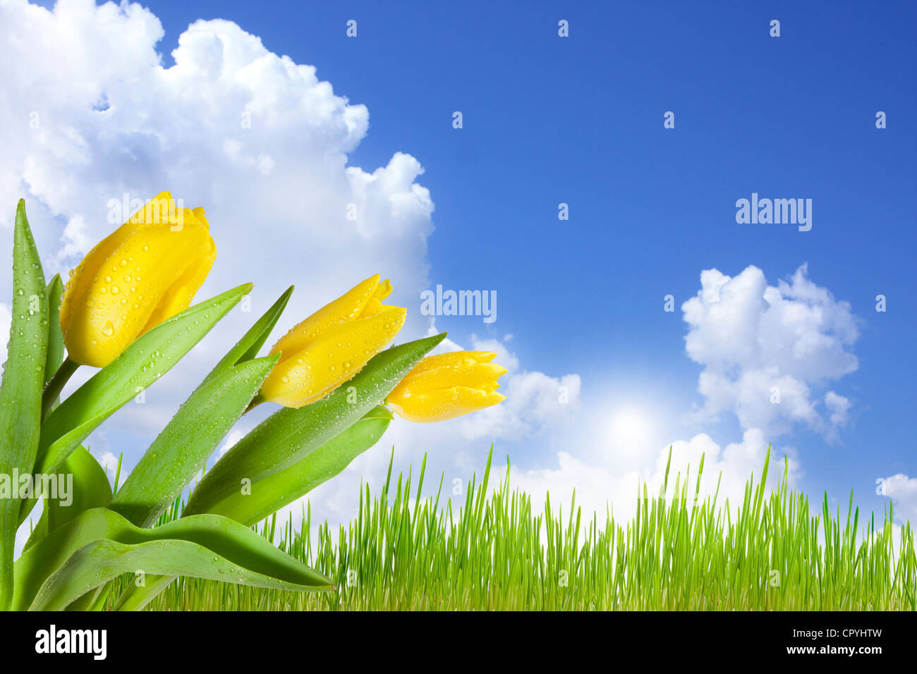 Landscape on the green meadow with blue sky abstract concept with tulips - Stock Image