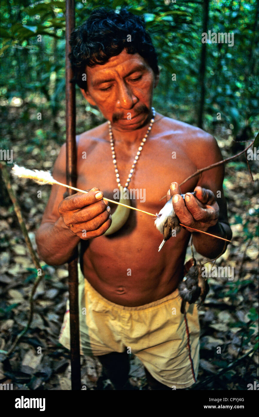 Venezuela, Amazonas State, Rio Sipapo, keeping their culture Piaroas indians hunt with a blowpipe - Stock Image