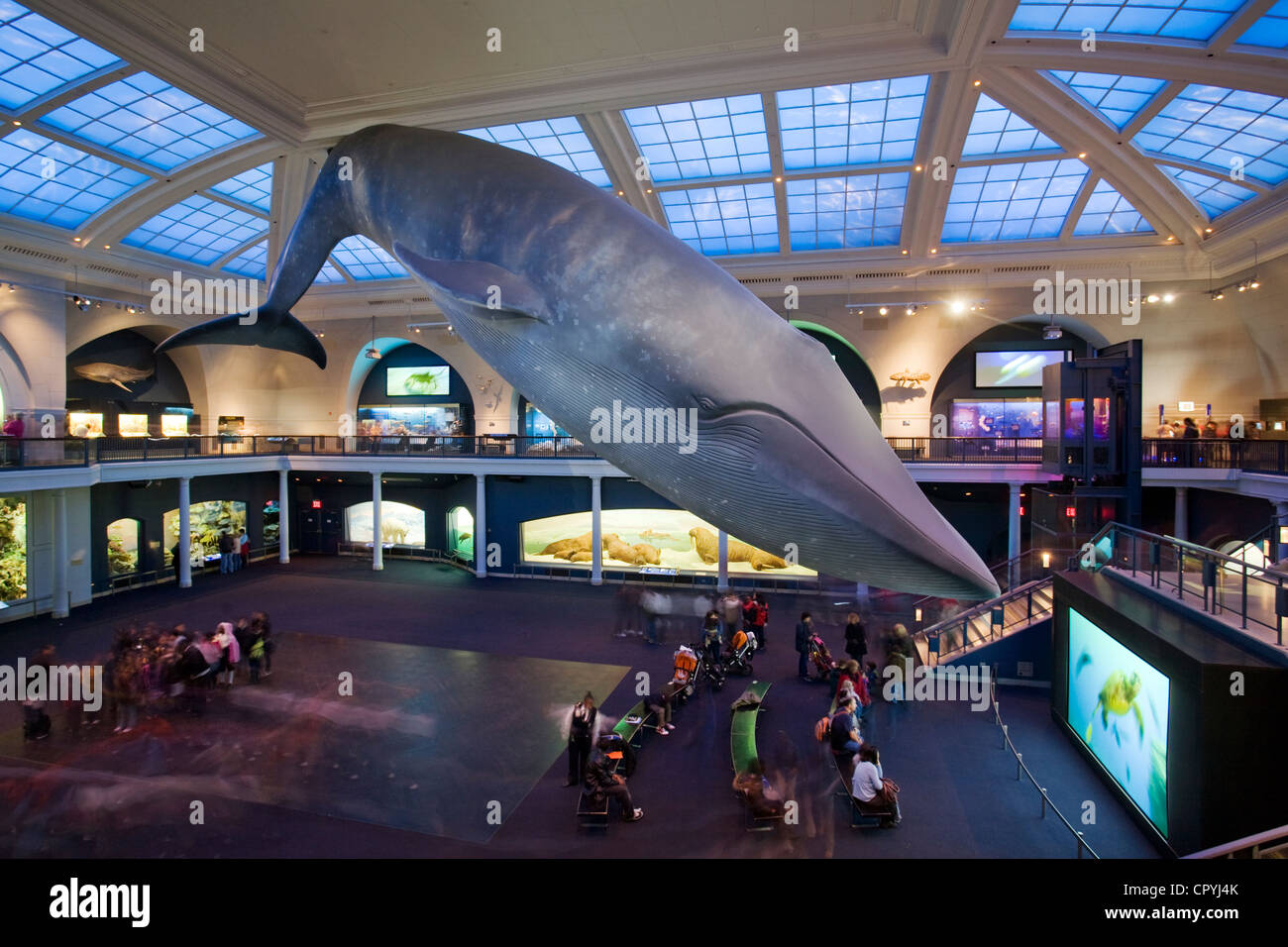 United States, New York, American Museum of Natural History - Stock Image