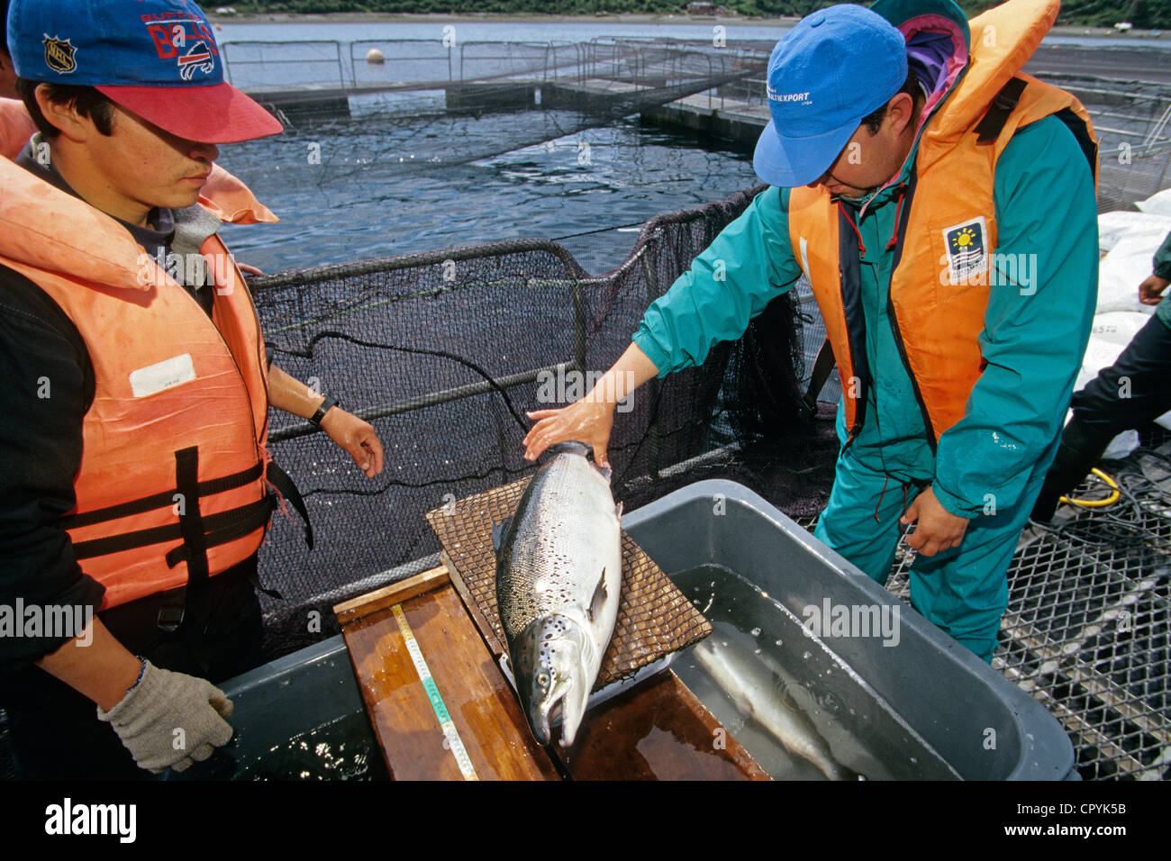 Chile, Los Lagos Region, Puerto Montt, intensive breeding of salmon, the country is the second producer in the world - Stock Image