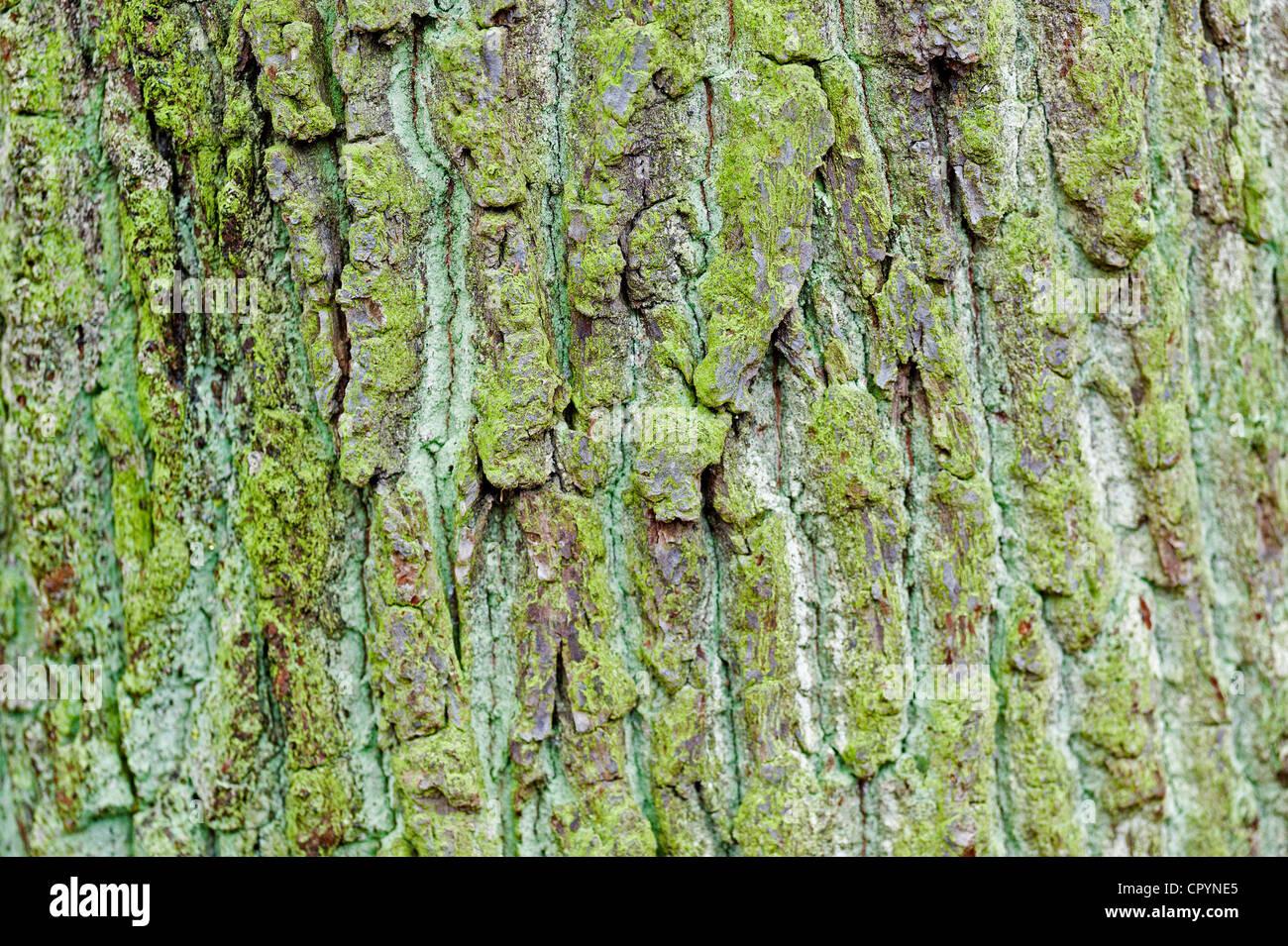 Coloured Bark Stock Photos & Coloured Bark Stock Images - Alamy