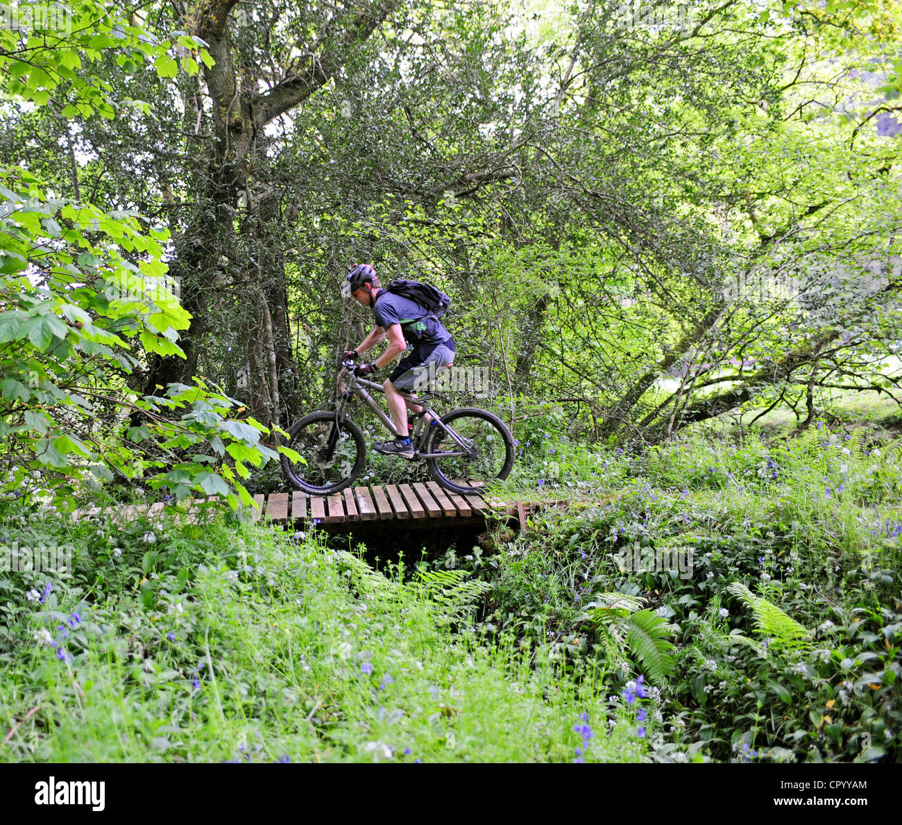 Mountain biking in woodland trails - Stock Image