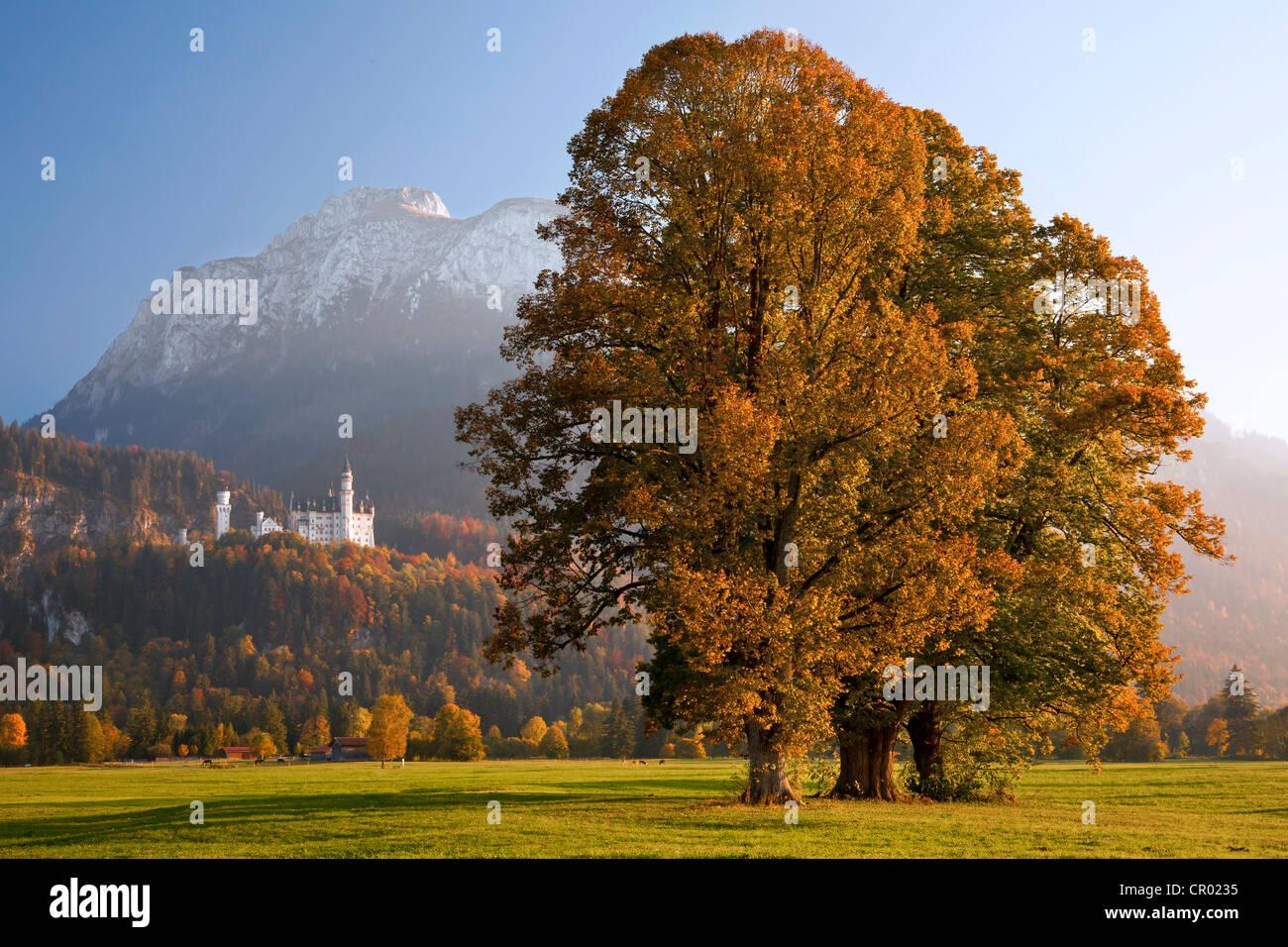 Autumn mood at Schloss Neuschwanstein castle in the evening light, Fuessen, Allgaeu, Bavaria, Germany, Europe - Stock Image