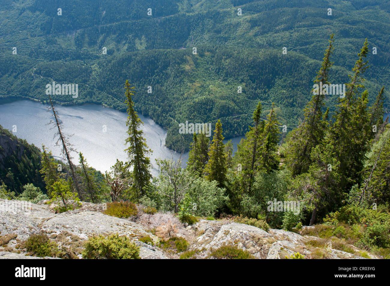 Aerial view onto conifers, Spruce trees (Picea abies), Lake Bandak, Lårdalstigen near Dalen, Lardalstigen, - Stock Image